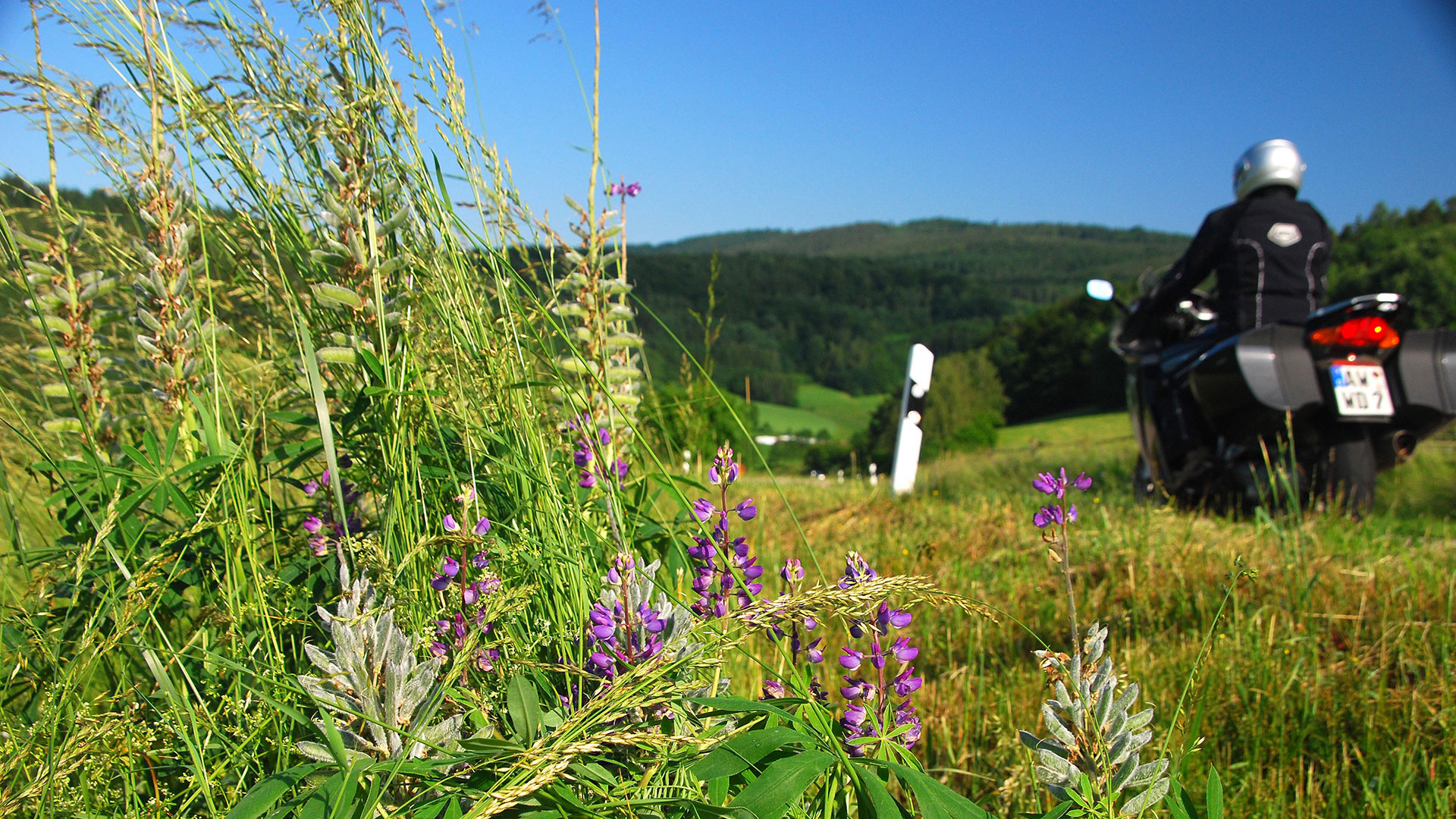 Südlicher Bayerischer Wald