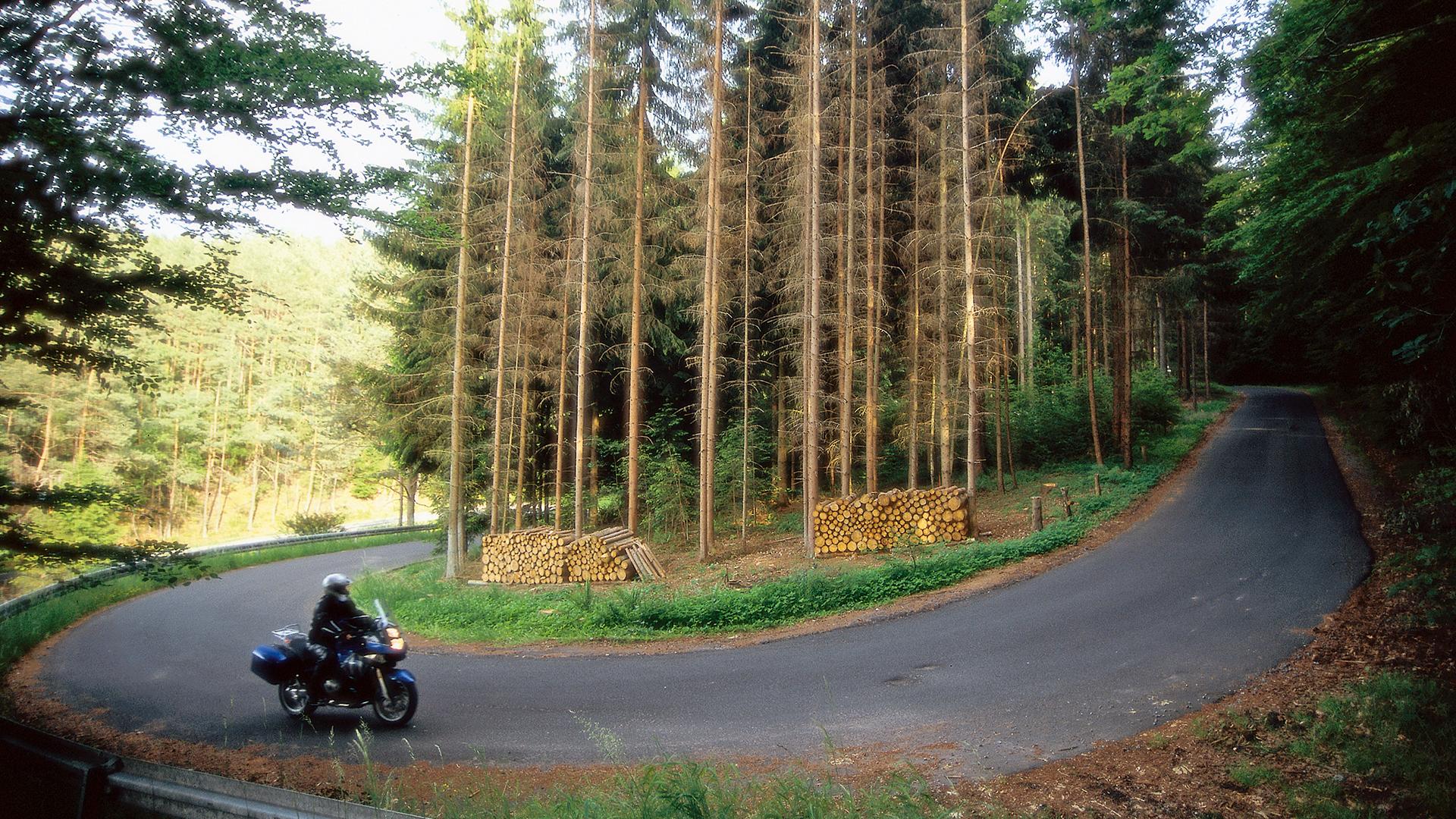 Im Wald, da sind die Räuber