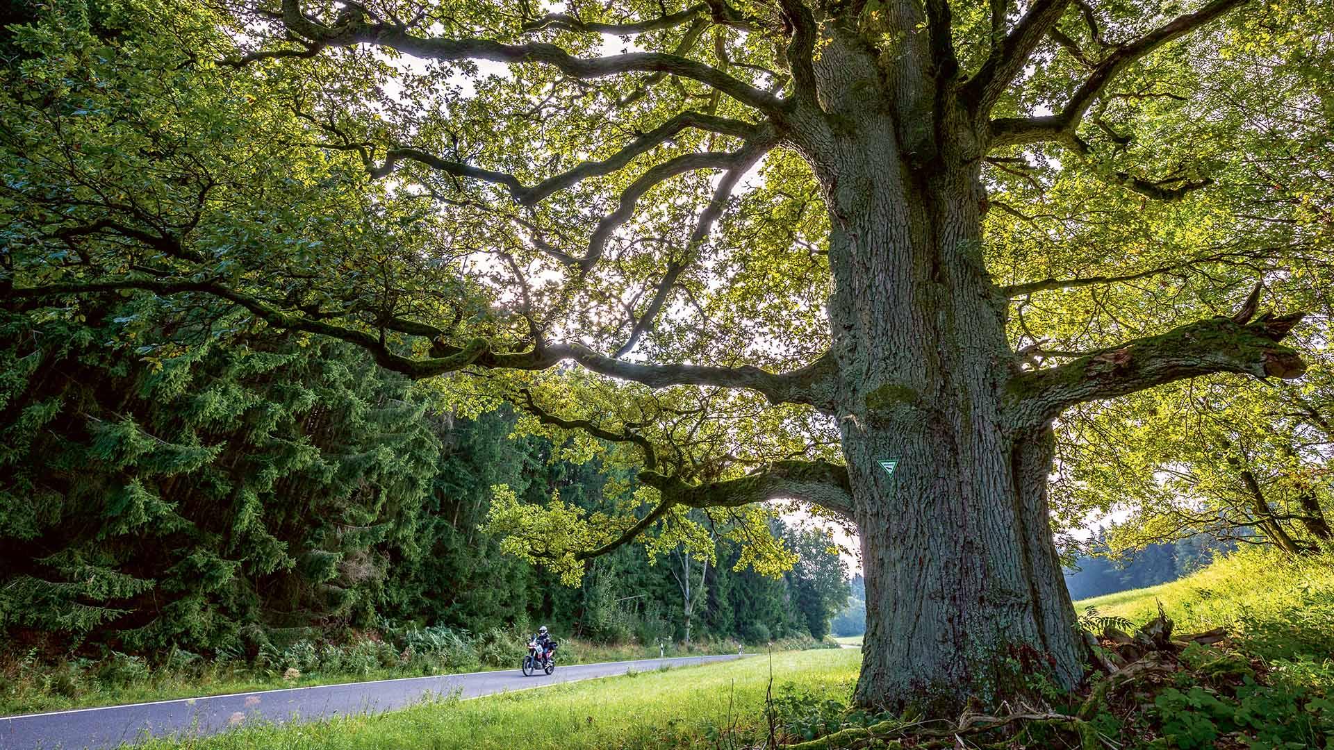 Durch den ewigen Wald