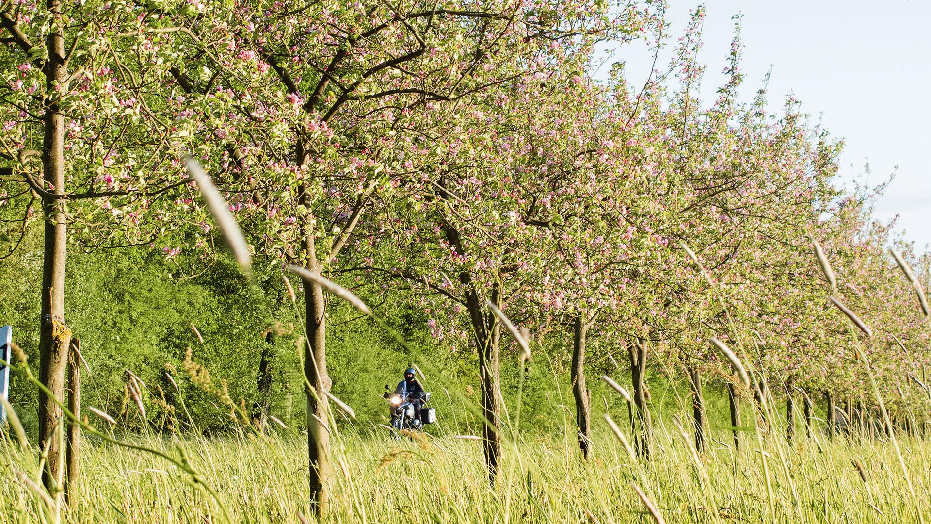 »Tour de Pommes«