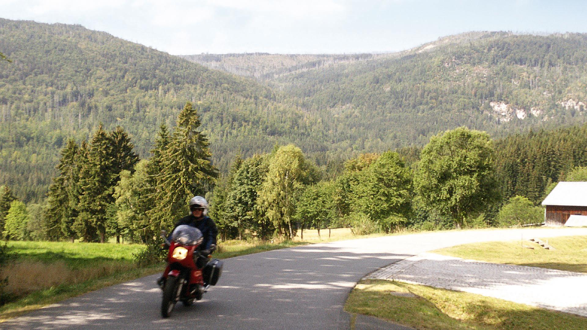 Von Exoten und Waldwogen