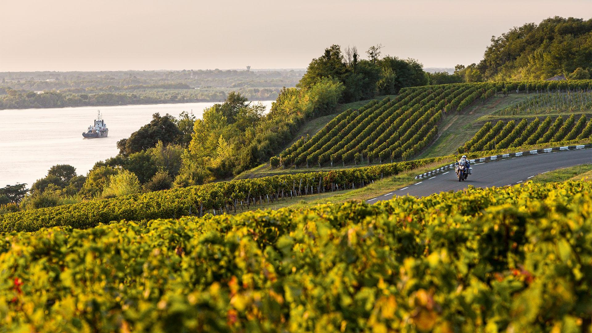 Wein-Wege