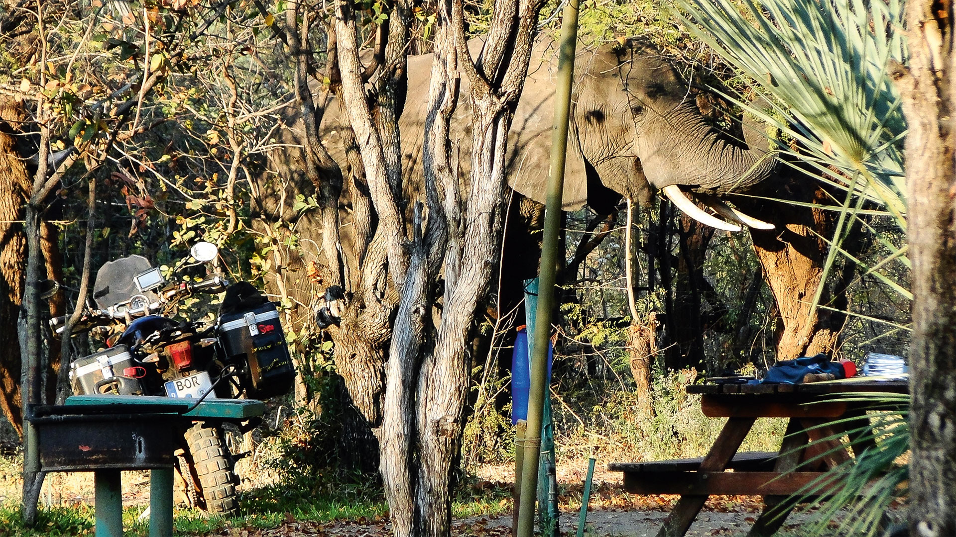 Safari mit Tiger - Teil 1