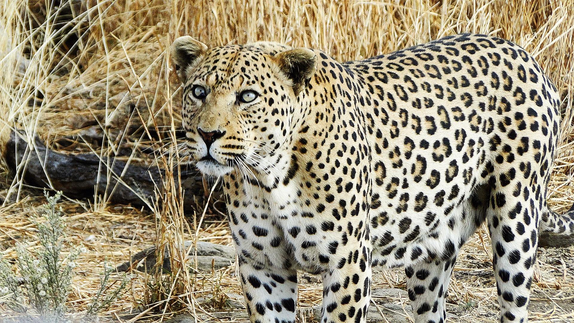 Safari mit Tiger - Teil 2